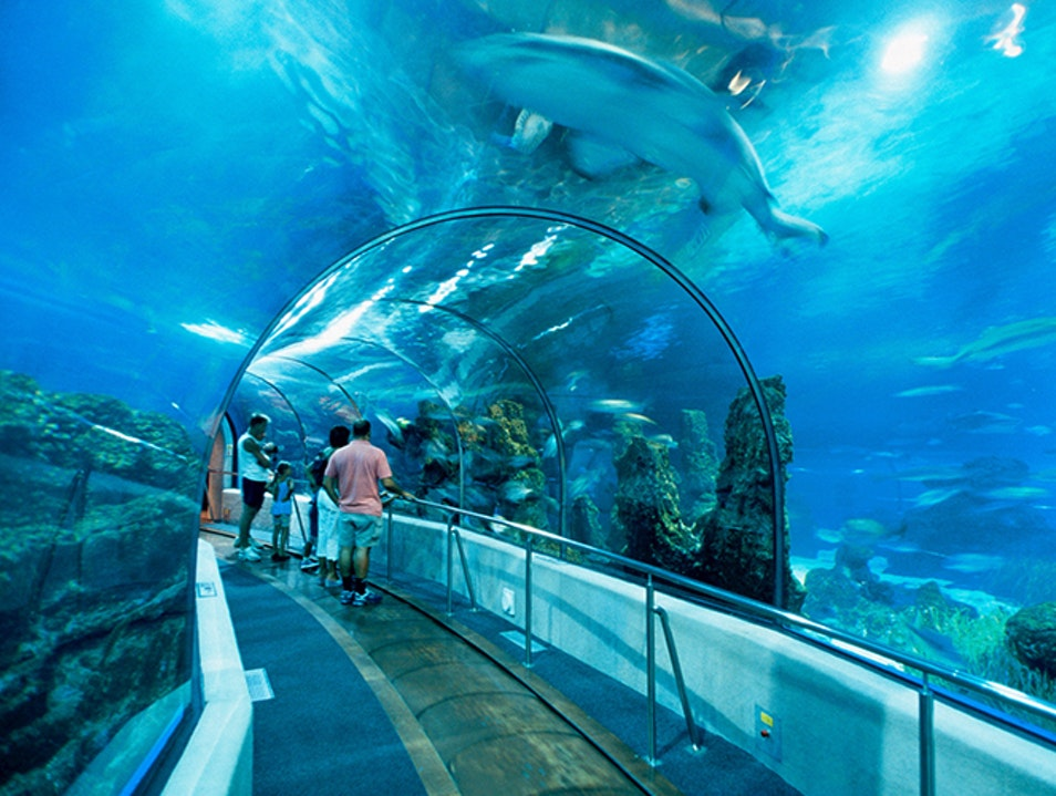Take a Walk with the Fishes at Barcelona's Aquarium Barcelona  Spain