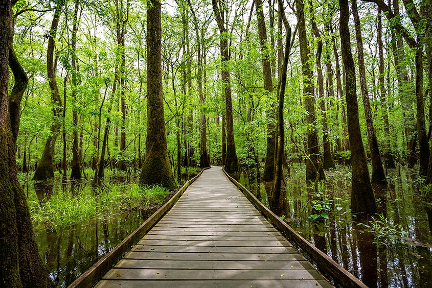 Congaree National Park earned UNESCO biosphere reserve status for its biodiversity, natural resources, and cultural heritage.
