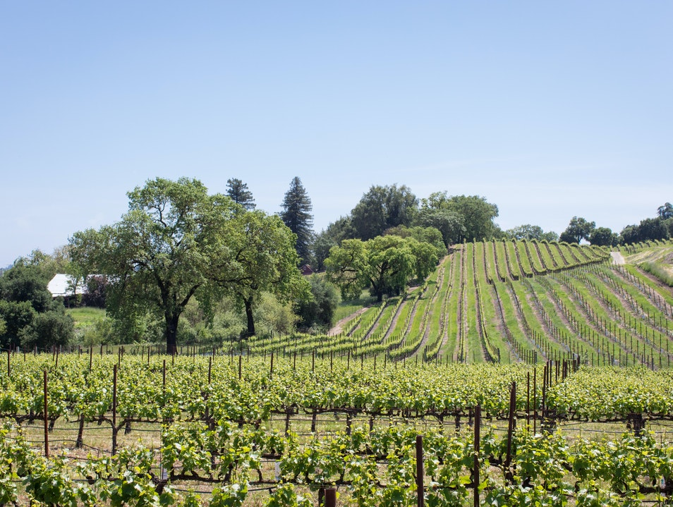 MacRostie Winery & Vineyards Healdsburg California United States