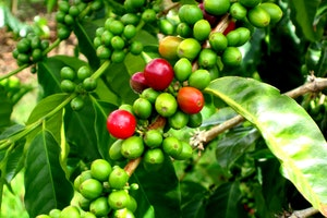 The Kona Coffee and Tea Company, Inc.