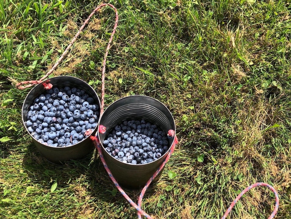 Where to Pick Blueberries in SW Michigan Michigan City Indiana United States