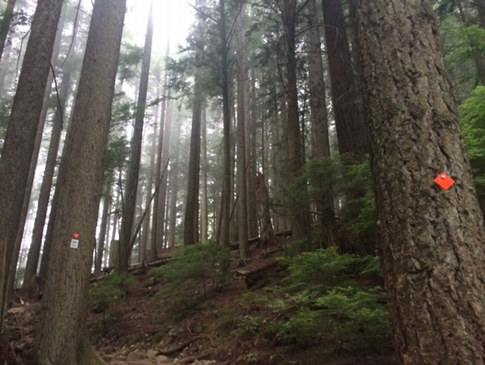 Get your exercise fix on a local mountain Vancouver  Canada