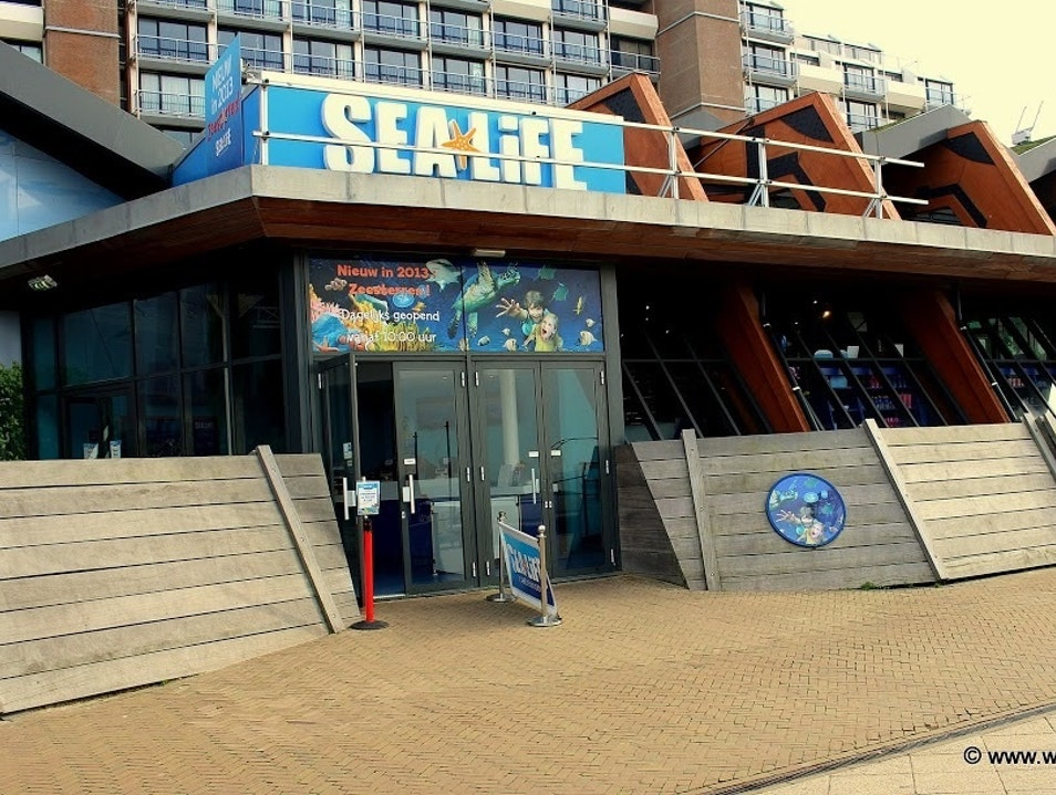 Exploring the Deep at SEALIFE Den Haag  The Netherlands