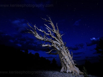 Ancient Bristlecone Pine Forest Bishop California United States