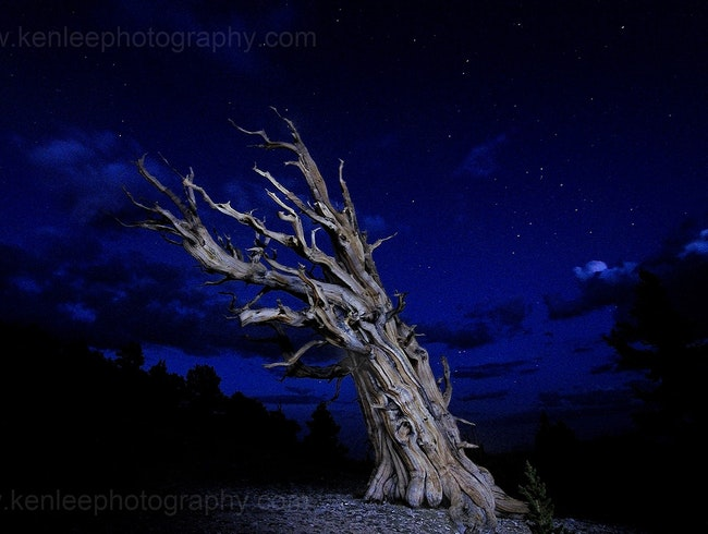 Ancient Bristlecone Pine Forest