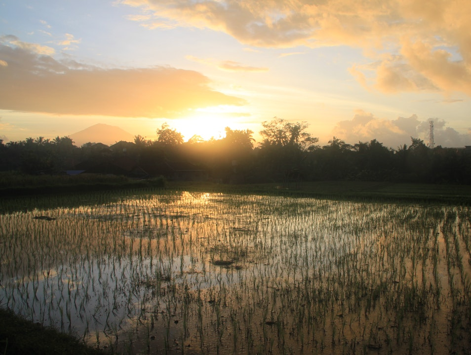 Sunrise over Rice Fields Ubud  Indonesia