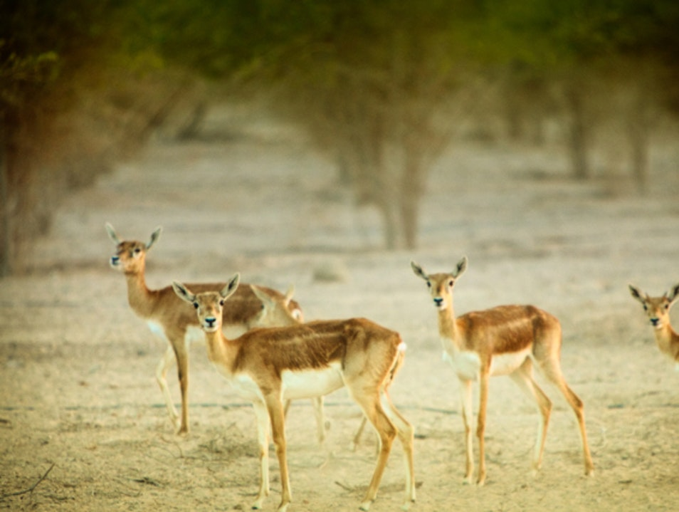 Sir Bani Yas Island Abu Dhabi  United Arab Emirates
