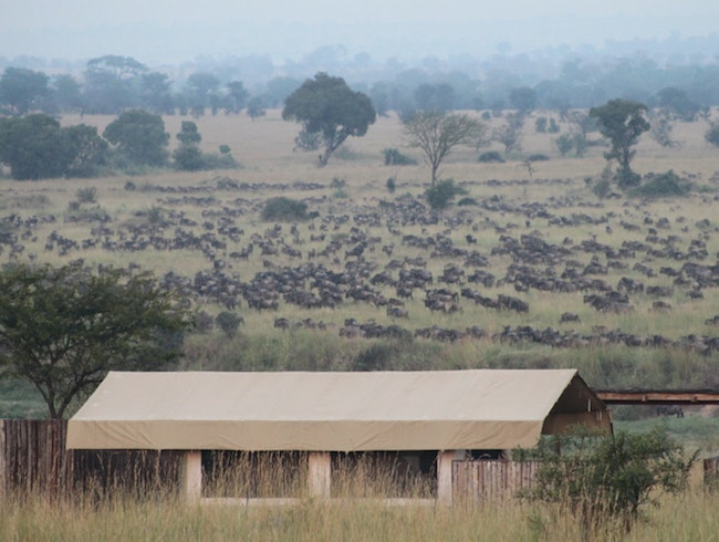 The Great Migration from Singita Mara River Tented Camp