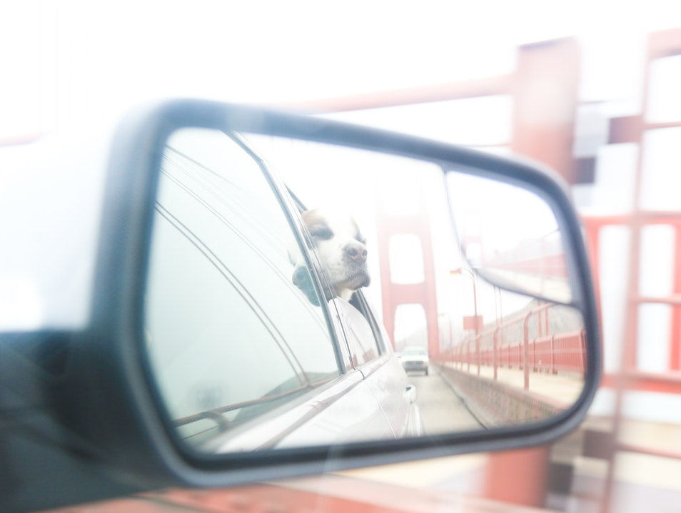 Cruising on the Golden Gate Bridge with your dog