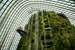 Singapore's Indoor Cloud Forest