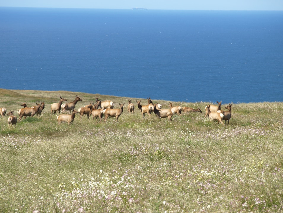 Elks by the ocean Inverness California United States