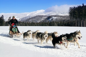 Mont Tremblant Dog Sledding