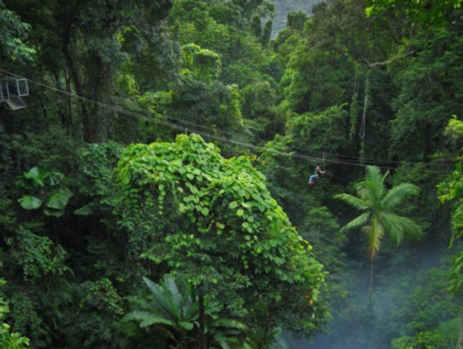 Flying Through the Daintree