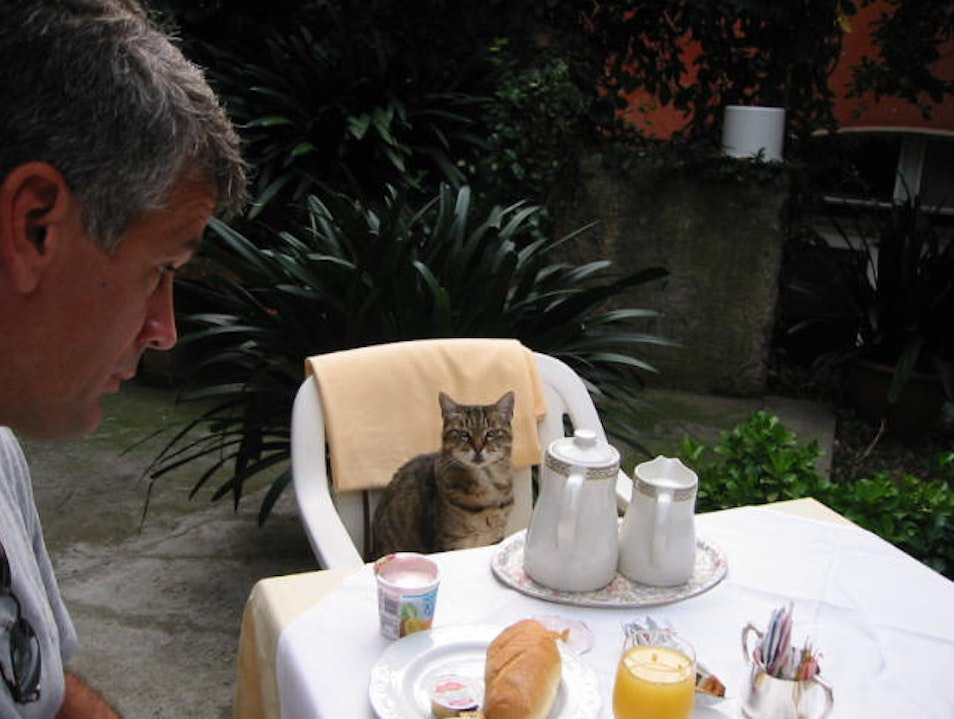 Breakfast with a new friend Portofino  Italy