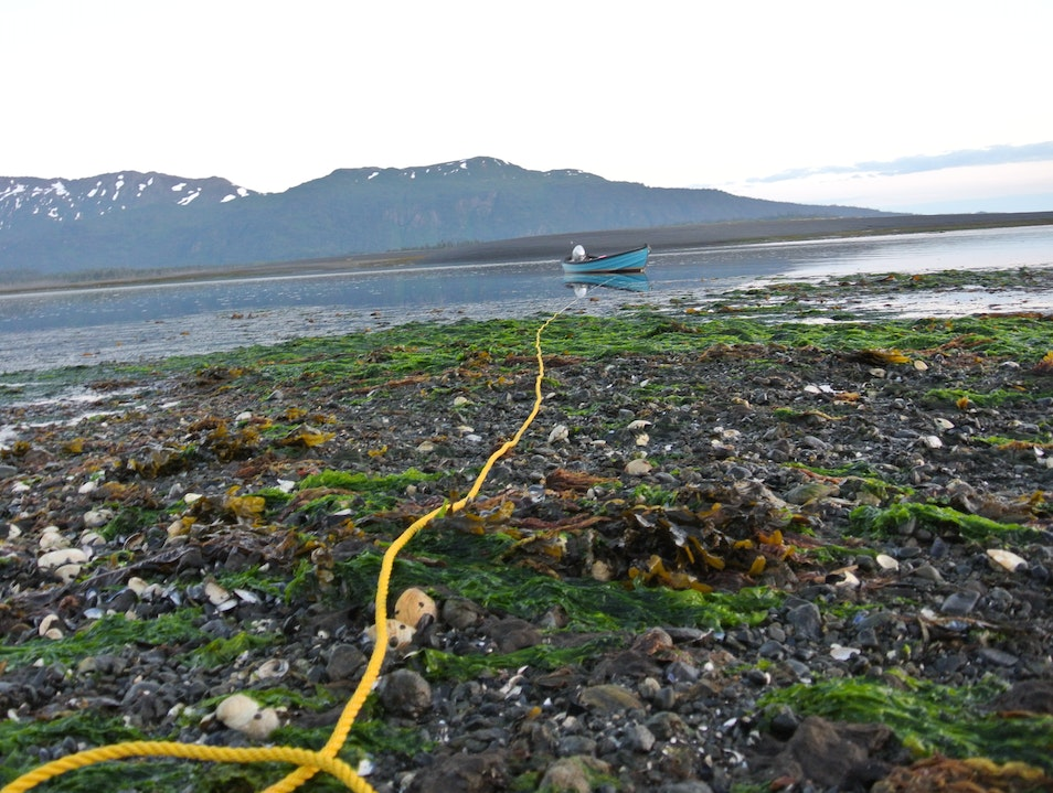 Midnight Mussel Gathering at Low Tide Seldovia Alaska United States