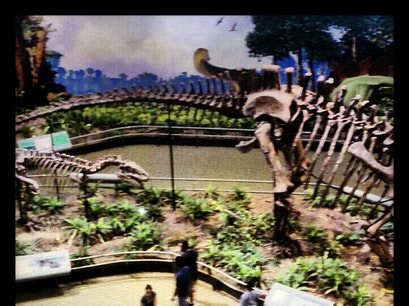 Carnegie Museum of Natural History Pittsburgh Pennsylvania United States