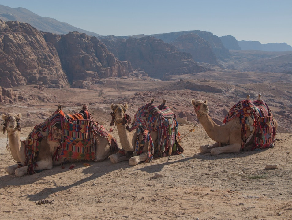 Exceptional camel ride Ma'an Governorate  Jordan