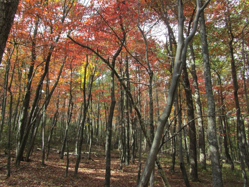 Fall in the forest!  Millboro Virginia United States