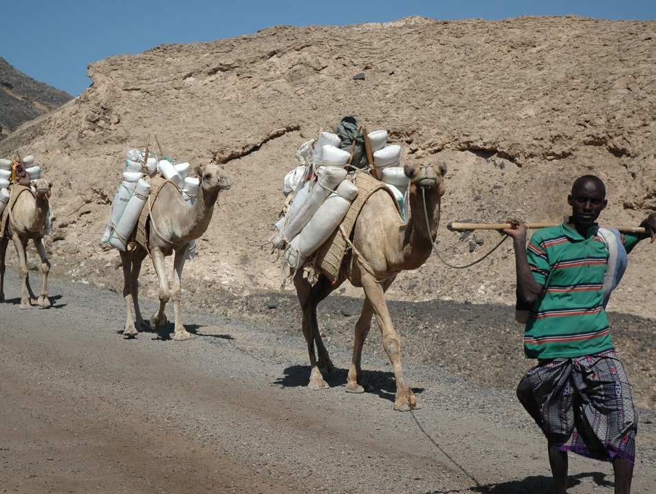 Afar tribesman taking salt to trade for Ethiopian coffee. Tadjoura  Djibouti
