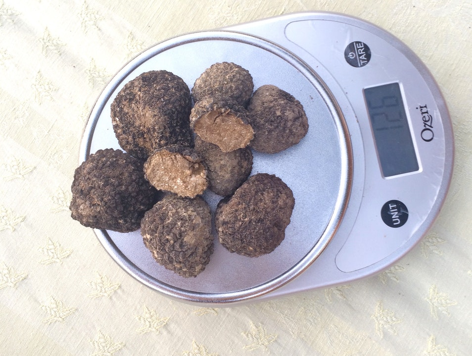 Hunt for Truffles in Provence