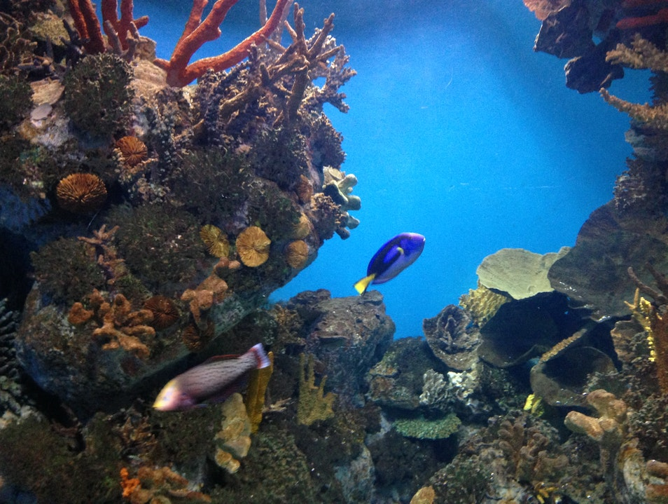 Take a Walk with the Fishes at Barcelona's Aquarium