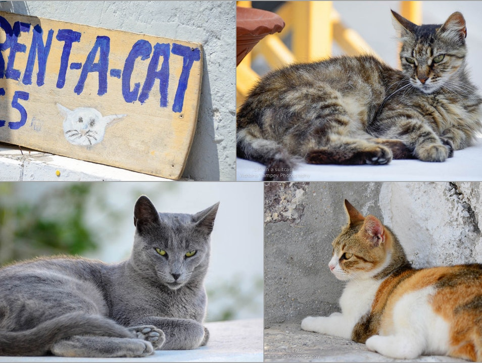 Rent a cat Oia  Greece