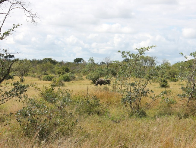 Protecting Rhinos in Central Botswana