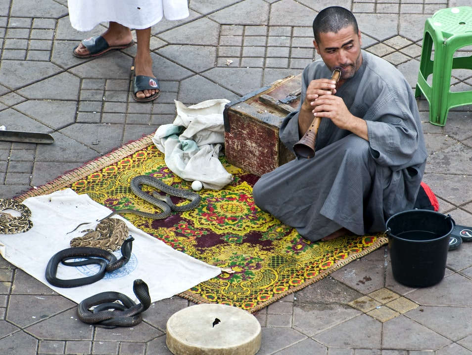 Moroccan Snake Charmers Marrakech  Morocco