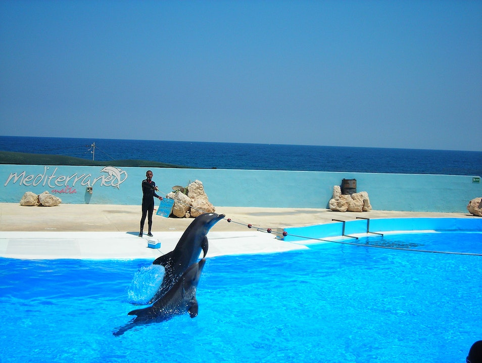 Swim with Dolphins in Sliema