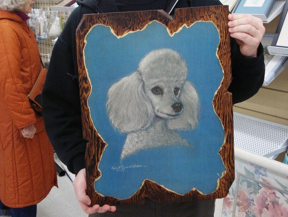 Poodle Doodles at Value Village Seattle Washington United States