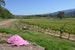 Welcome to Yarra Valley's Wine Country