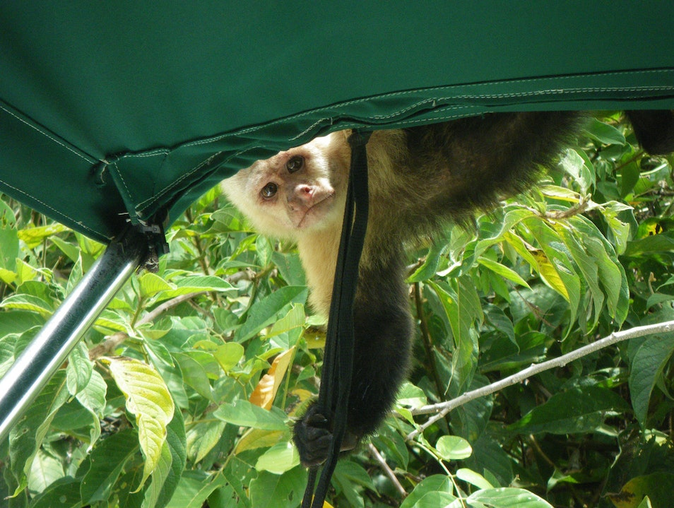 See Gatun Lake with a Nature Guide