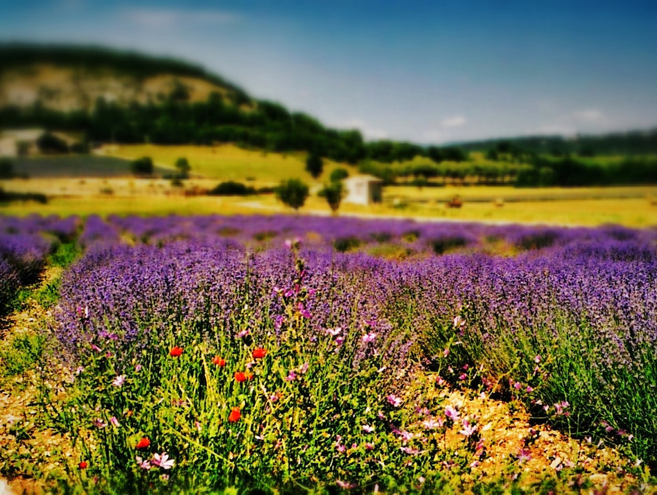 summer fields in the south of France Velleron  France