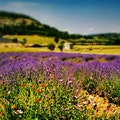 Provence Velleron  France