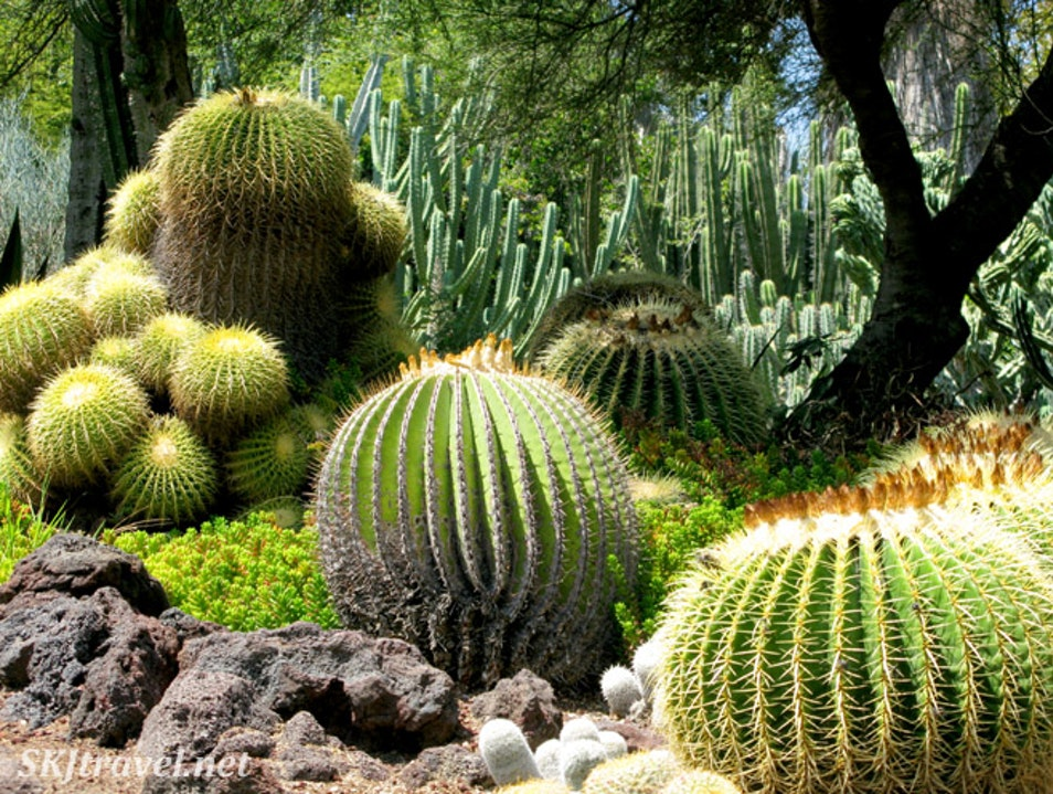 Cacophony of Cacti and Swaths of Succulents at Huntington Botanical Garden San Marino California United States