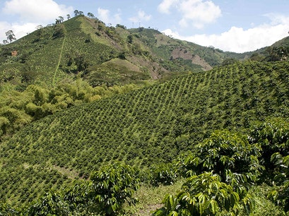 Triángulo del Café | The Coffee Triangle Mistrato  Colombia