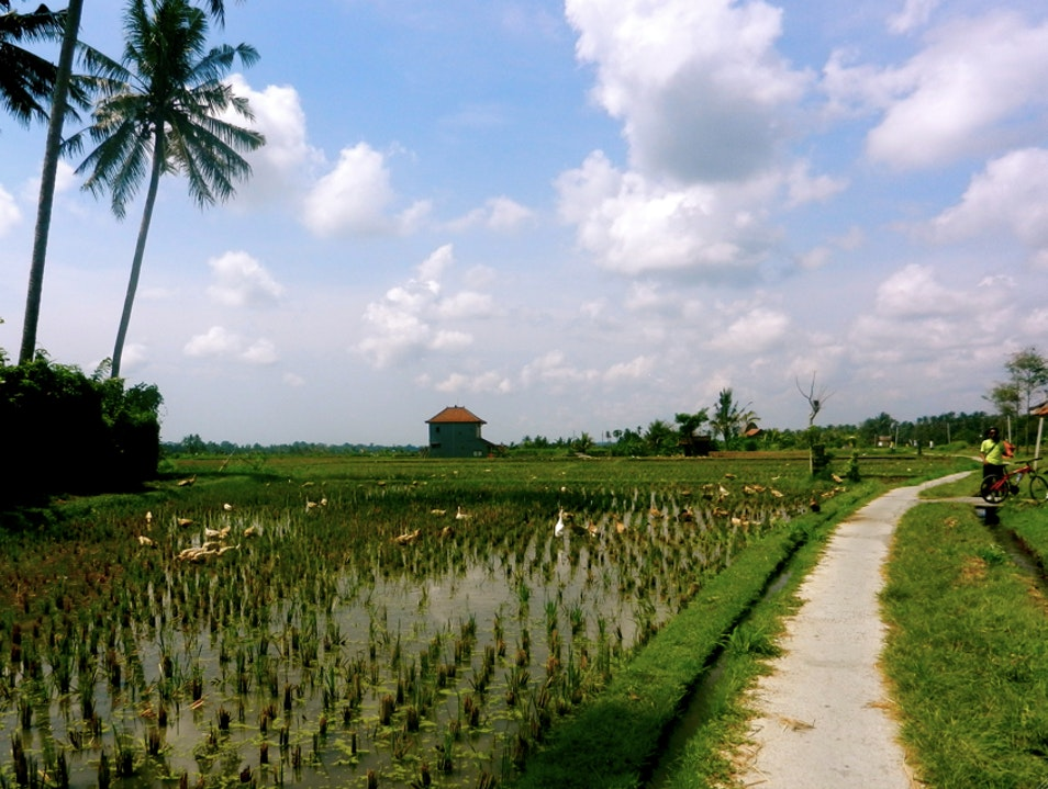 Two Wheelin' Through Temples, Rice Paddies & Patchouli Ubud  Indonesia