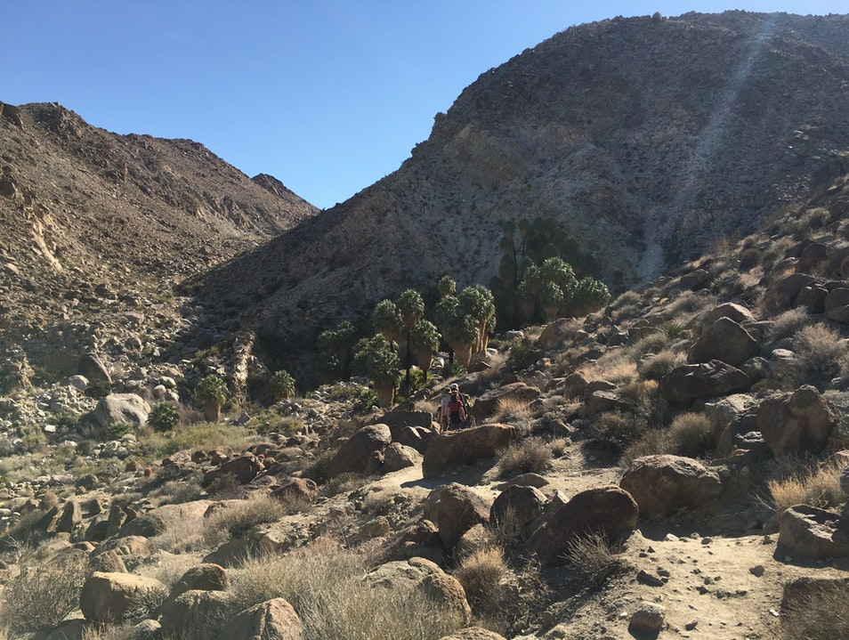 Hike to the 49 Palms Oasis in Joshua Tree Twentynine Palms California United States