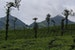 Wayanad-A hilly spicy green district