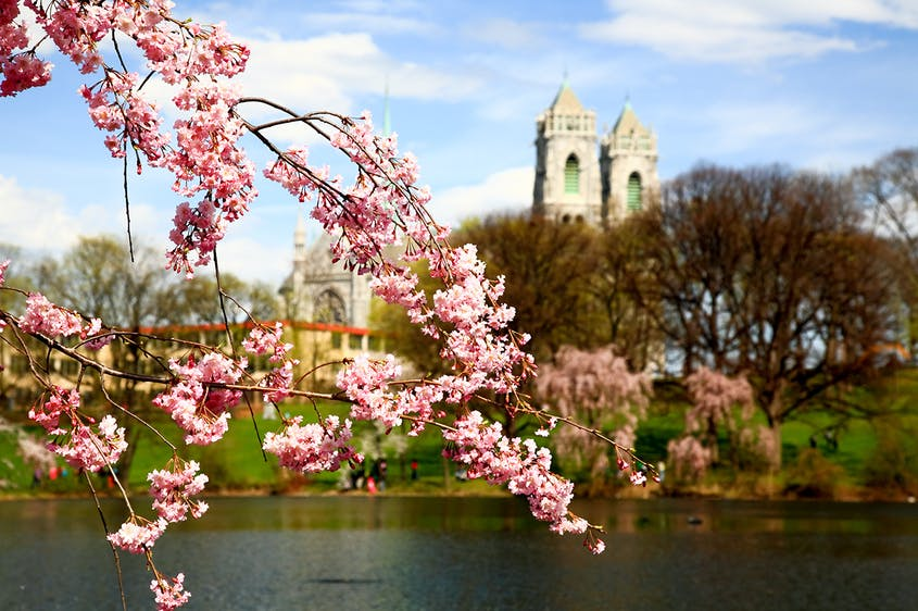 There are actually more cherry trees in Newark's Branch Brook Park than there are in Washington, D.C., which is famous for its blooms.