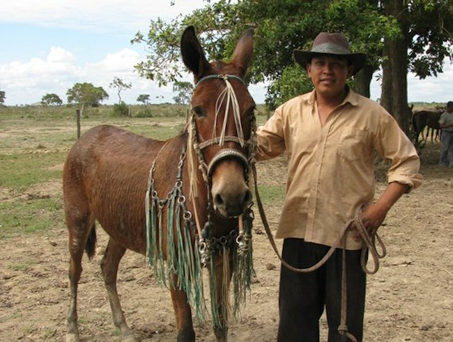 Ride with Cowboys in the Bolivian Pampas