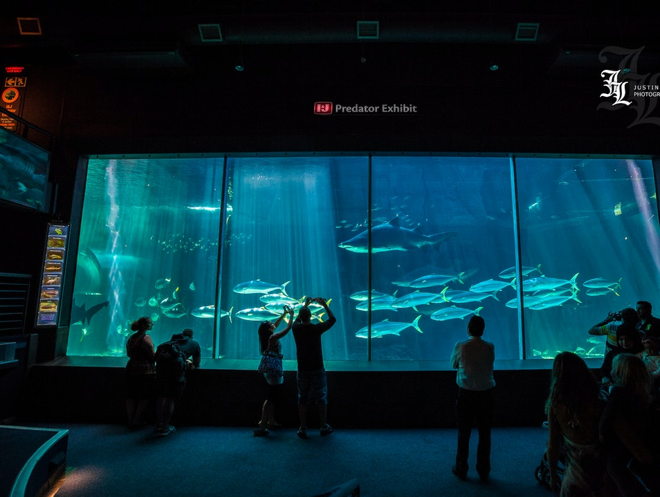 Take a Dip with Some Man Eaters at the Two Oceans Aquarium