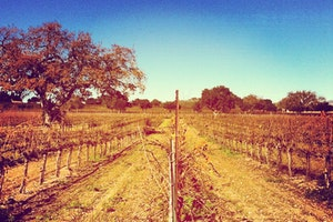 Firestone Vineyard