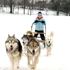 Rob Roy Dogsledding