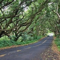 Highway 137 and Pohaiki Road near Malama-Ki Forest Reserve  Pāhoa Hawaii United States