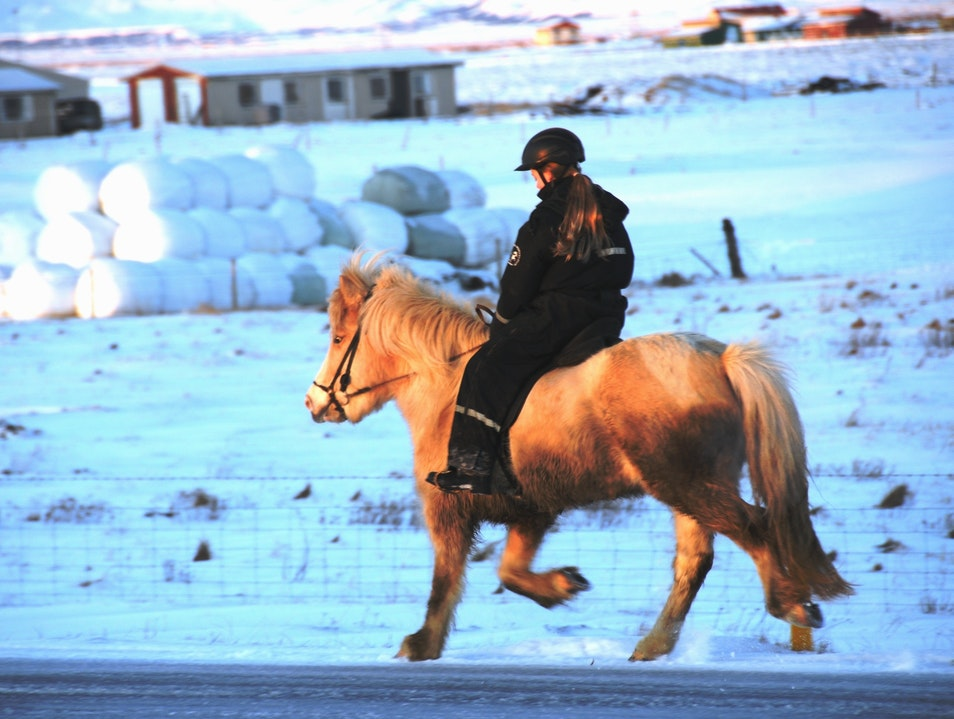 Now That's What I Call Horsepower Eyrarbakki  Iceland