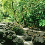 Waisali Rainforest Reserve
