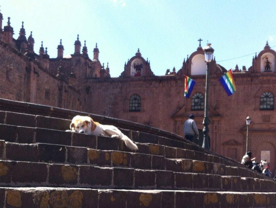 One Of Many dogs Of Cusco