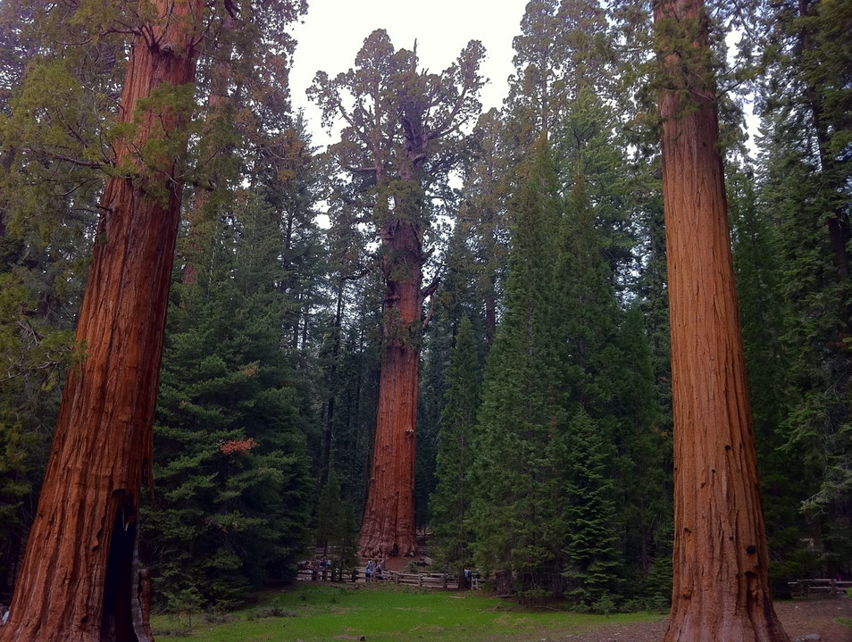 Old trees Kings Canyon National Park California United States