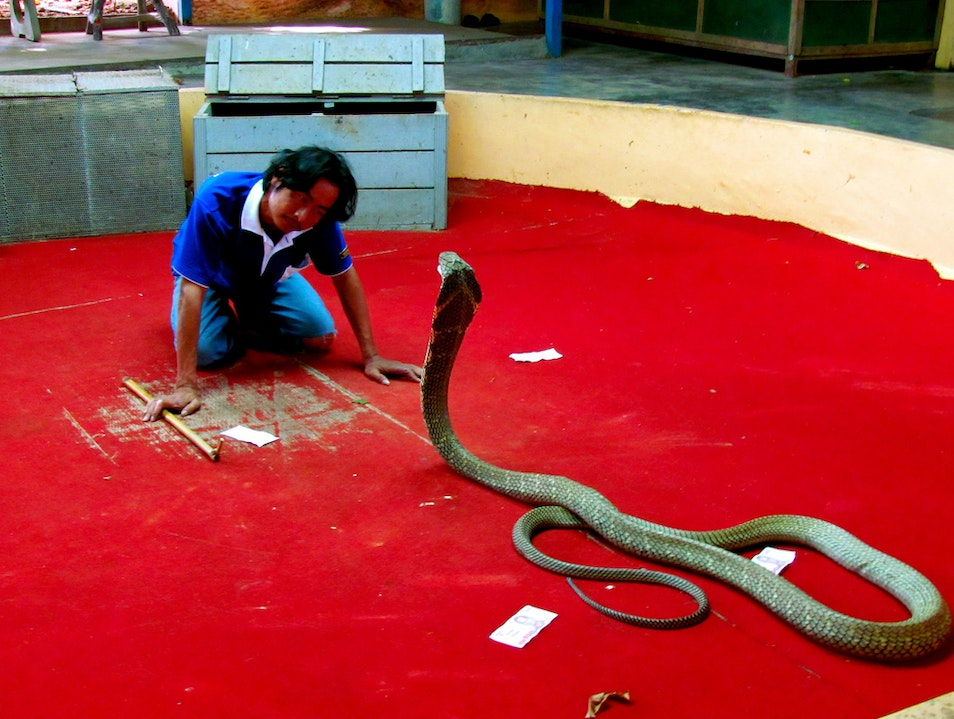 Snake Farm and Show Chalong  Thailand